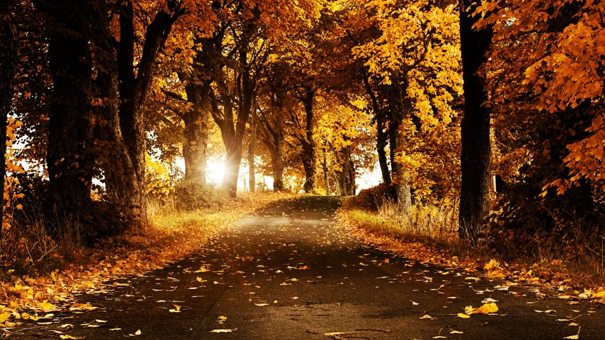 autumn nature trees forest wallpaper