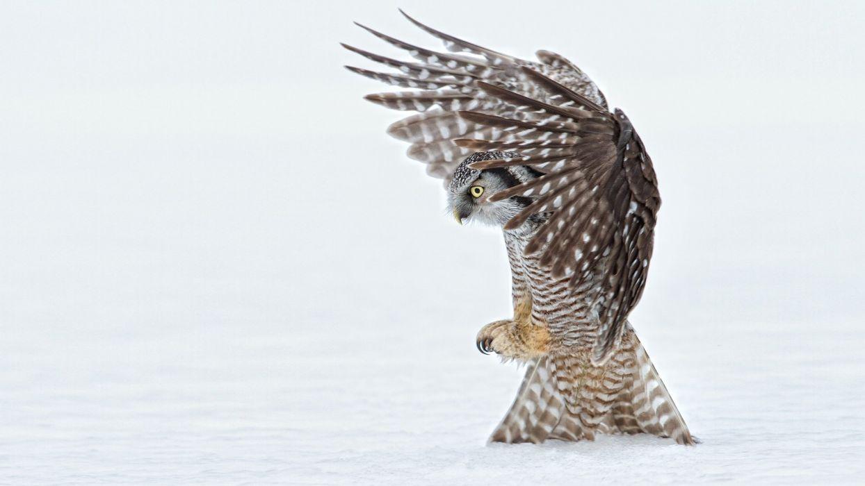 awaking the fear of beauty owl wallpaper