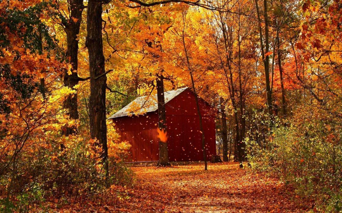 ART - Autumn red maple forest cabins portrait wallpaper