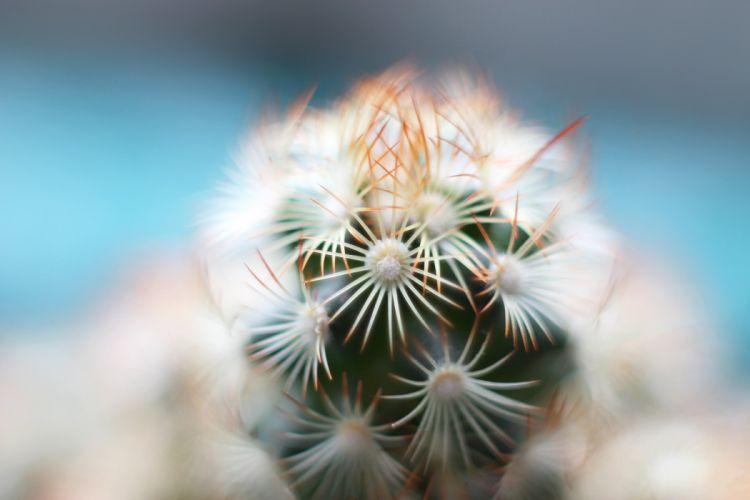 cactus macro spines plant D wallpaper