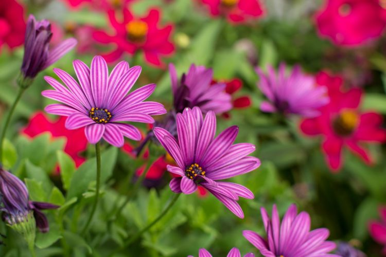 nature flower beautiful flowers plant colorful petals wallpaper