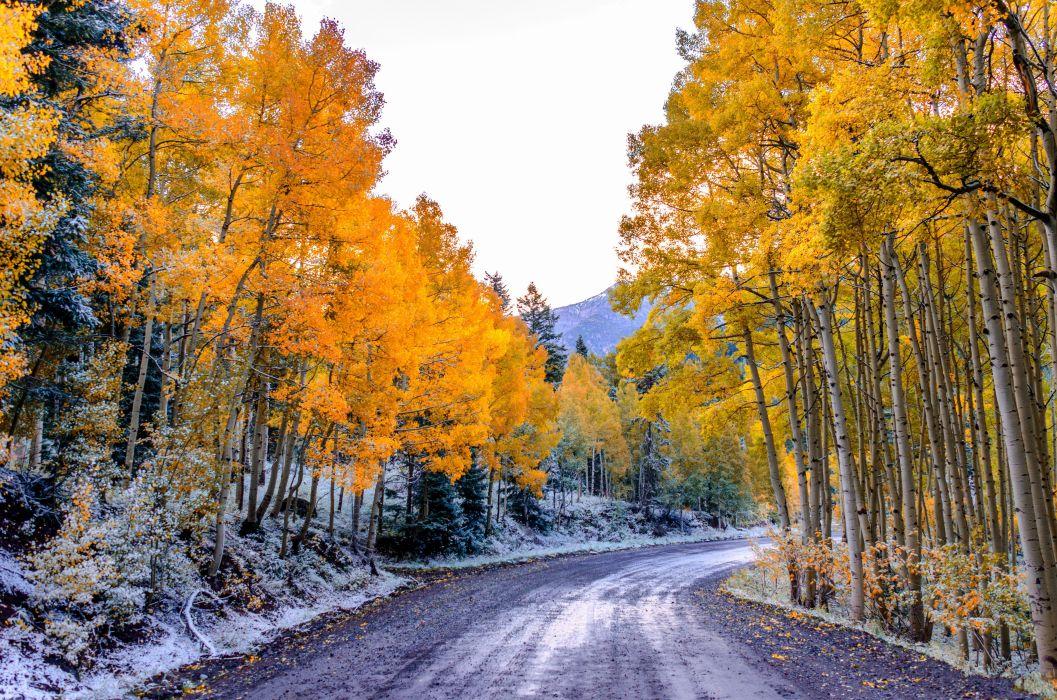 autumn on tree's road wallpaper
