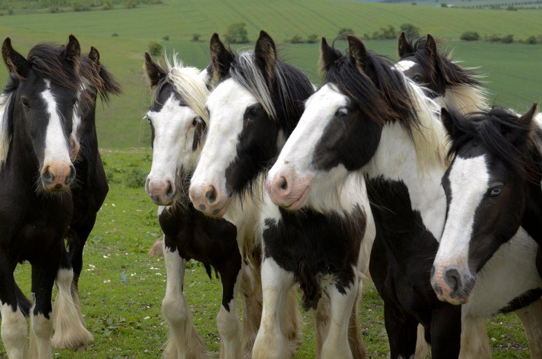 crazy horses wallpaper