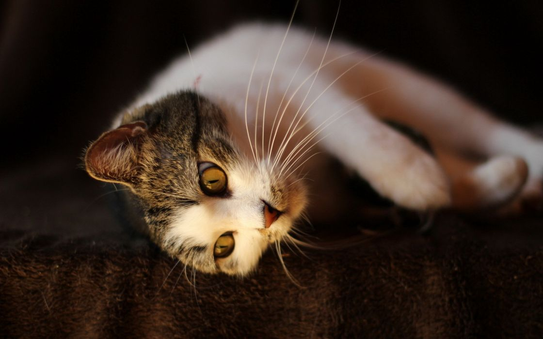 cat animal cats beautiful lovely cute animals wallpaper
