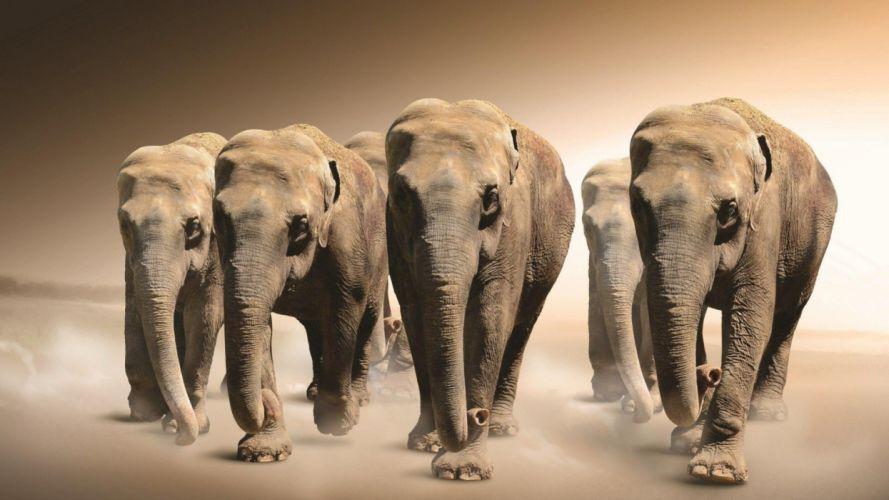 elefantes-manada-animales wallpaper
