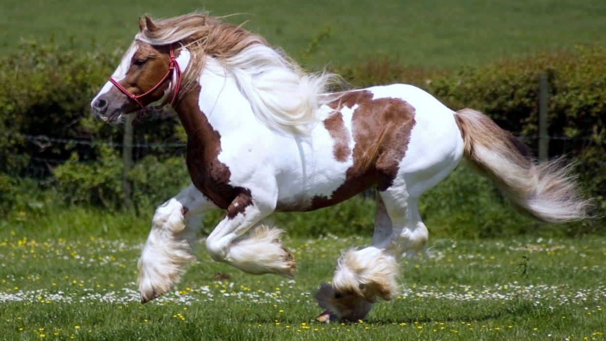 kildale horses wallpaper