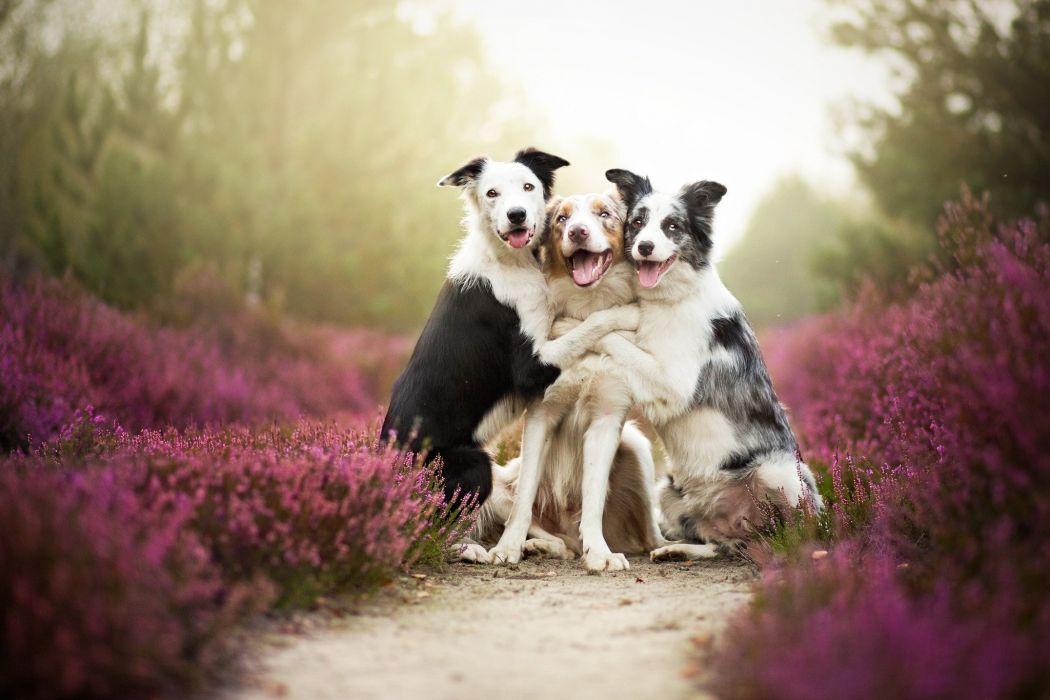 dog humor funny mood hug love wallpaper