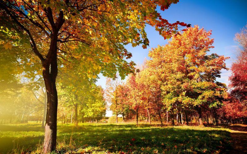 naturaleza-paisajes-arboles-otoA wallpaper