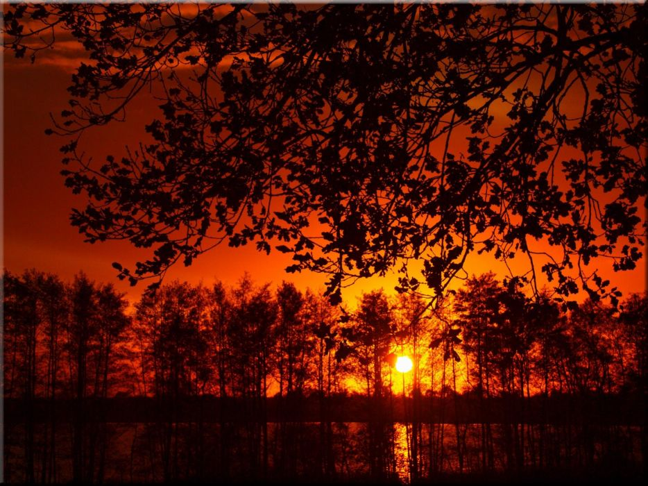 sunset tree landscape forest wallpaper