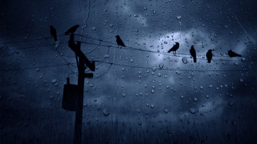 weather rain birds winter cloudy sky wallpaper