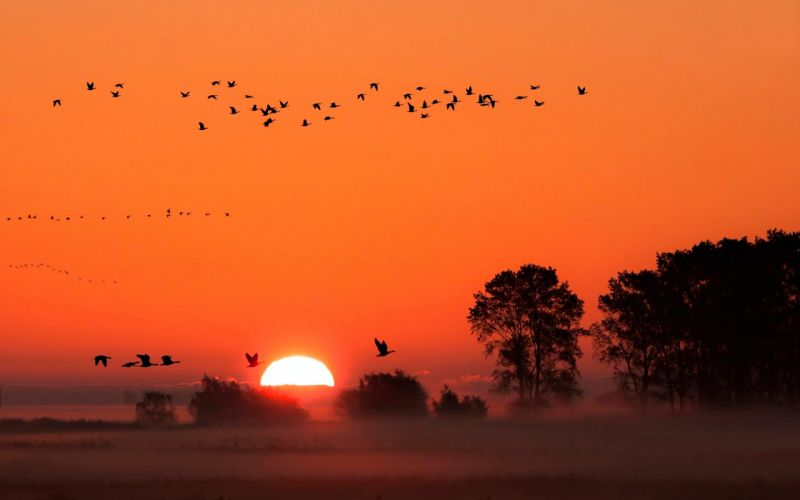 nature sunset birds romance love dreams beauty life wallpaper