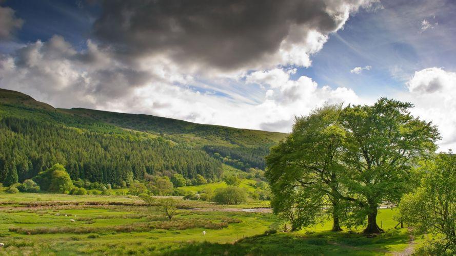 naturaleza-campo-paisajes-arbol-prado wallpaper