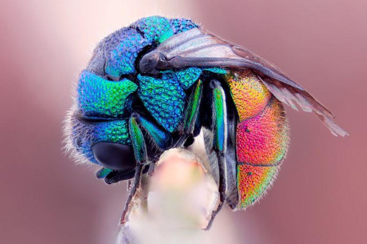 Fly wallpaper