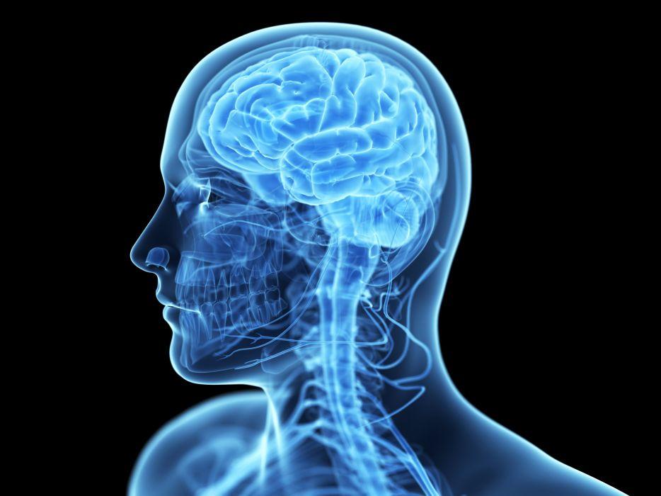 Brain Anatomy Medical Head Skull Digital 3 D X Ray Xray Psychedelic