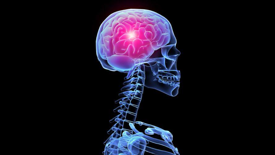brain anatomy medical head skull digital 3-d x-ray xray psychedelic skeleton wallpaper