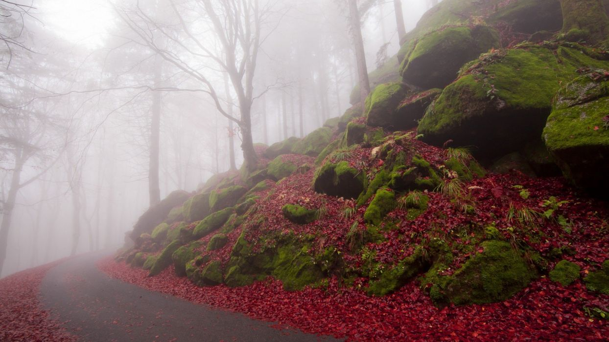 FOG HILLSIDE ROAD wallpaper