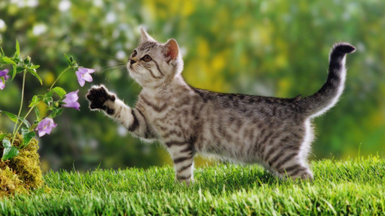 animals-cats-flower cute grass wallpaper
