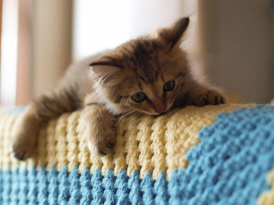 beautiful-cat-adorable-sweet-animal cute wallpaper