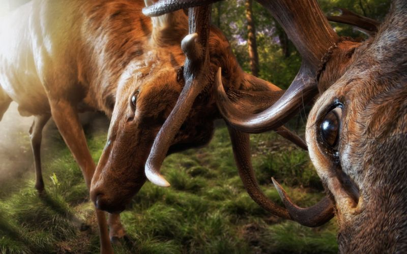 the-fight-hornes-deer-eyes animal wallpaper