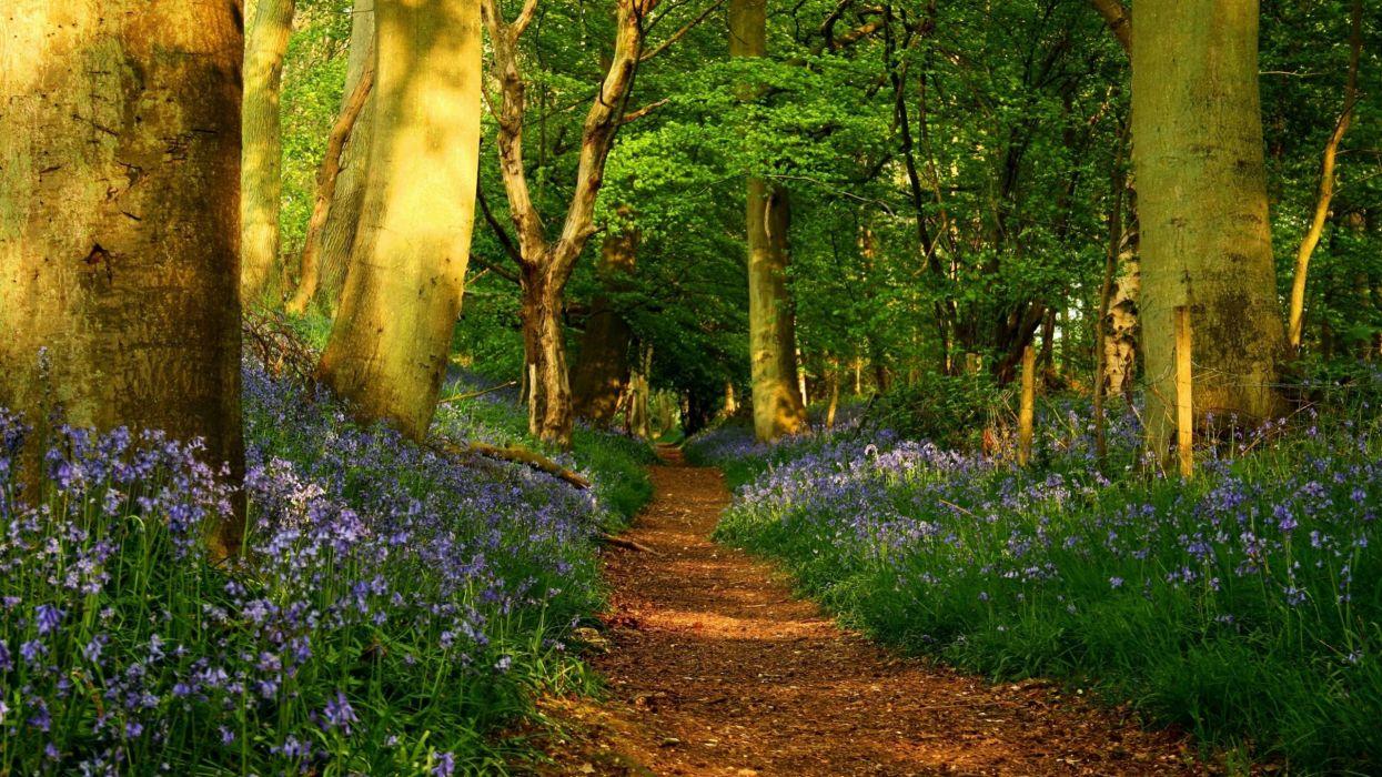 bosque-sendero-naturaleza-paisaje wallpaper