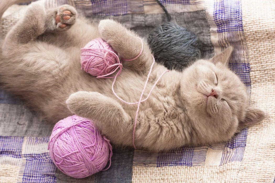 sleeping-kitty-cat-home-yarn ball cute wallpaper