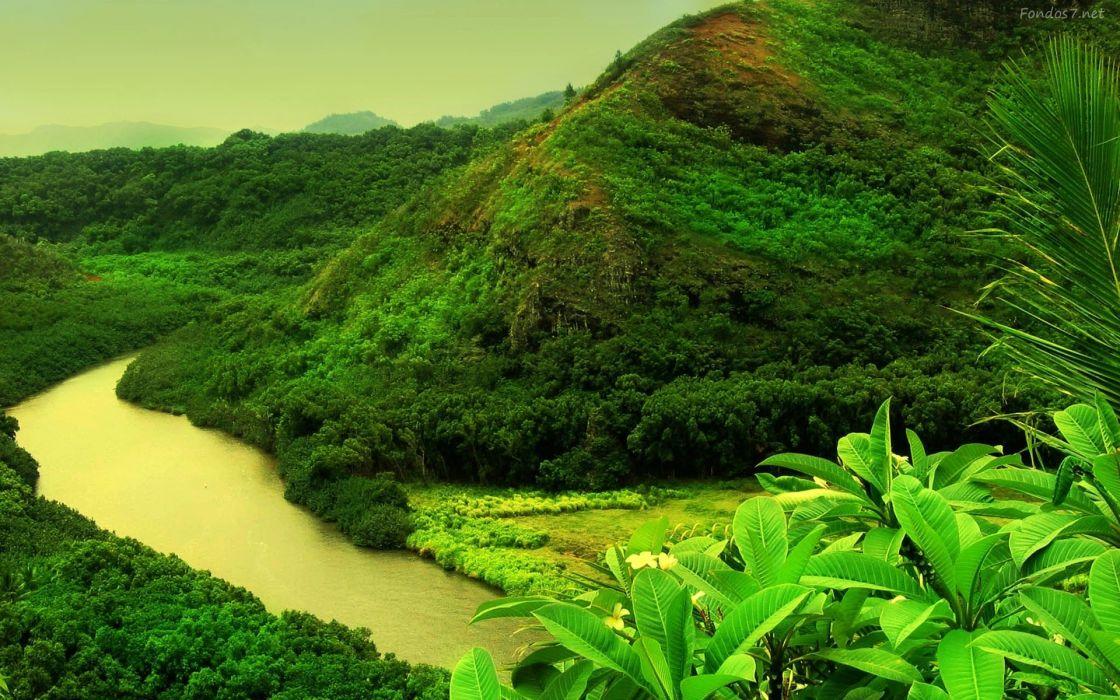 selva-rio-naturaleza vegetacion-paisaje wallpaper