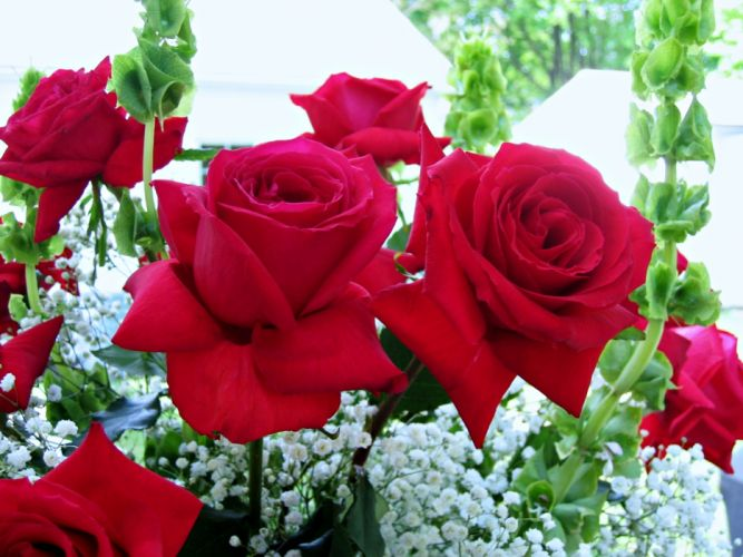 for - emotions - Flowers - garden - love - beauty - romance - rose - Spring - life wallpaper