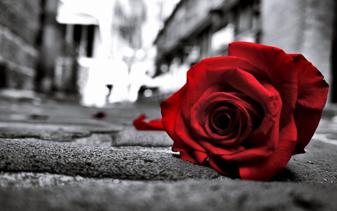 Rose Sad Black Lost Love Emotions Flowers Life Road Floor Lonely