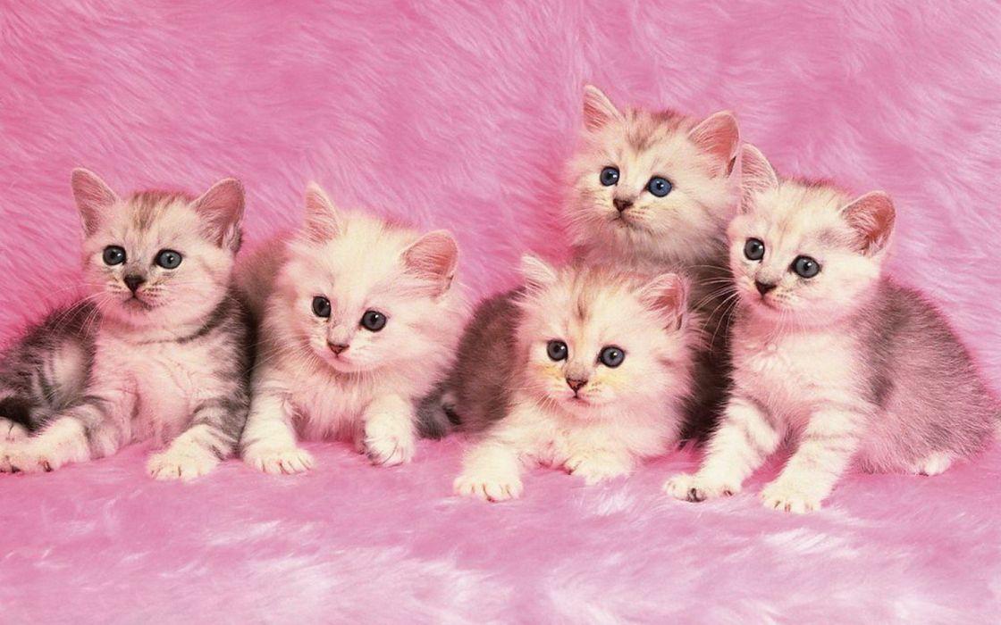 gatitos-cachorros-rosa wallpaper