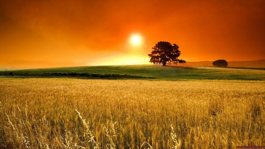 amanecer-trigo-sol-arbol-naturalez-paisajes wallpaper