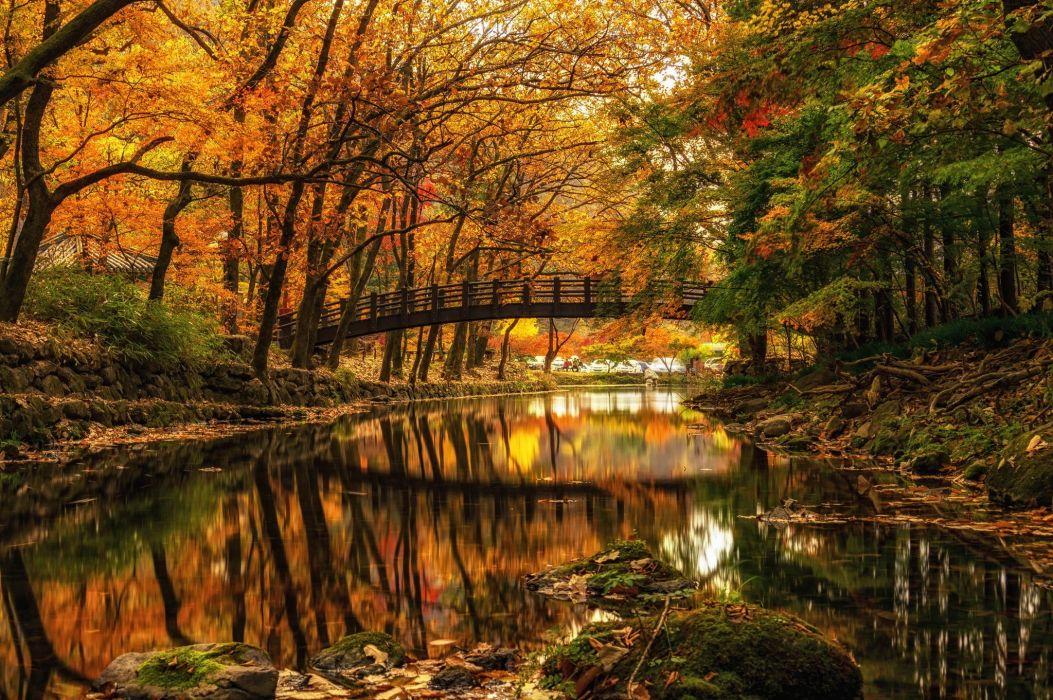 autumn river bridge Park trees wallpaper