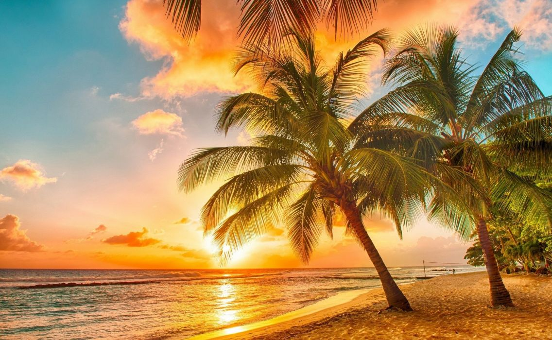 beach palm trees tropical sunset wallpaper