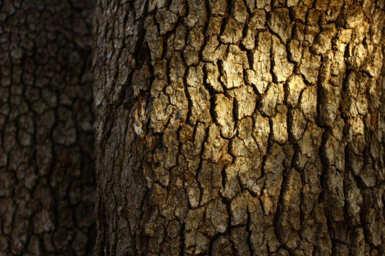 bark tree trunk wallpaper