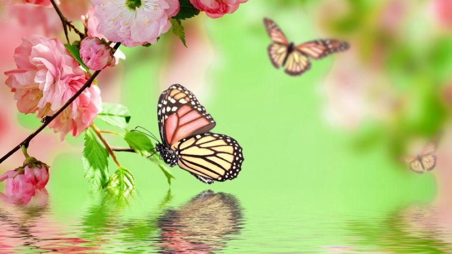 butterflies flock butterfly s wallpaper