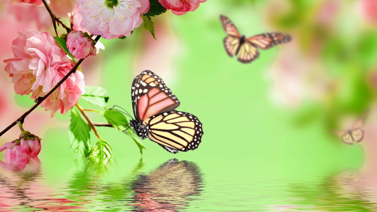 butterflies flock butterfly s wallpaper