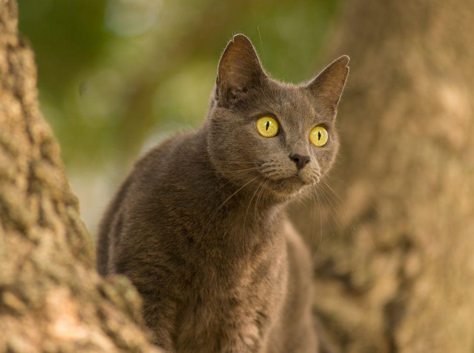 cat enormous eyes wallpaper