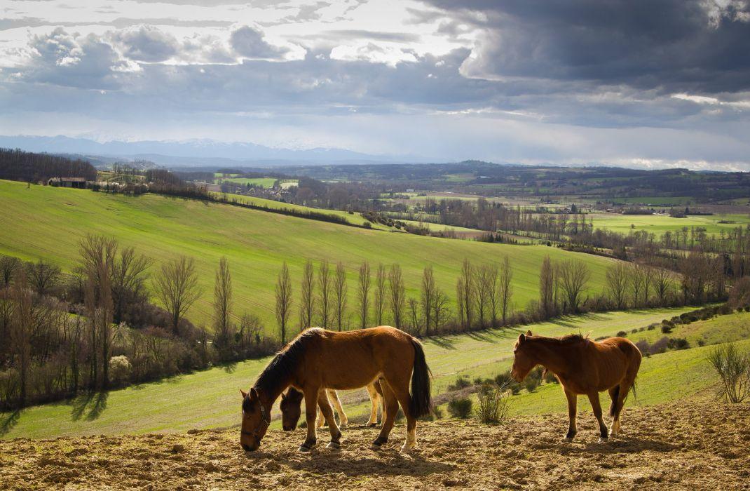 fields hills Derbe Horse wallpaper