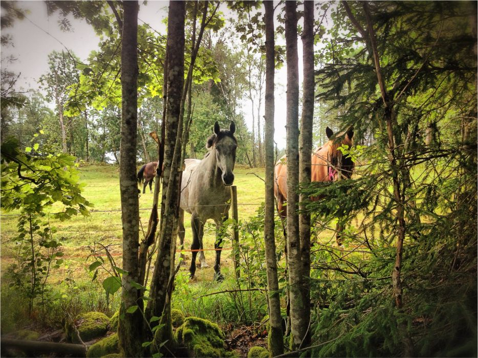 forest meadow trees horses nature horse wallpaper