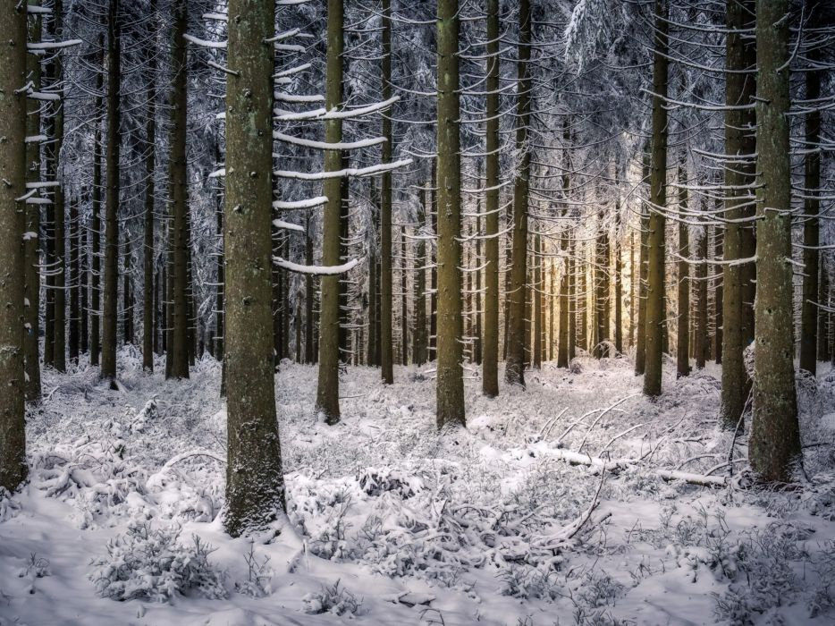 forest trees branches winter snow Baiersbronn Baden-Wurttemberg Germany wallpaper