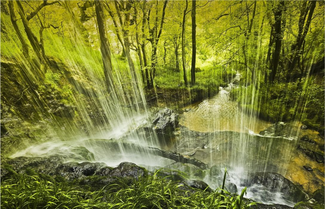 forest trees waterfall nature wallpaper