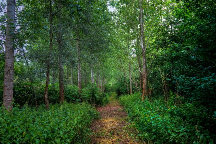 Forests Trees Shrubs Trail Nature wallpaper