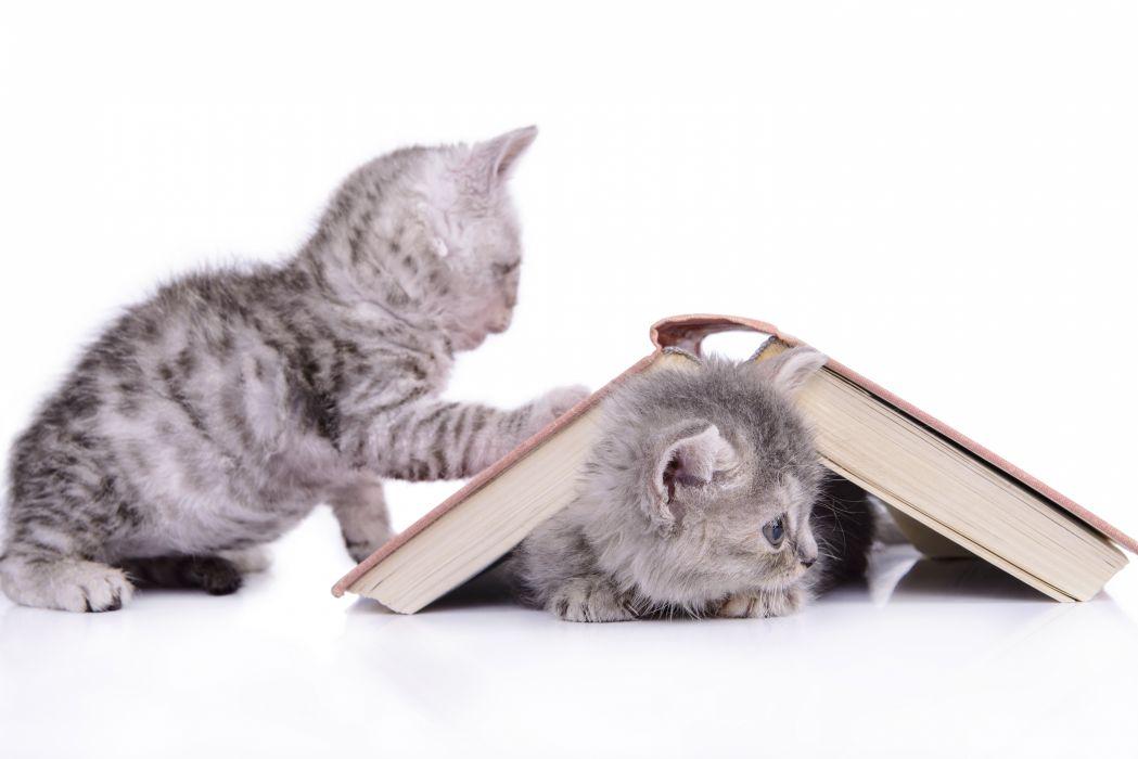 kitten book baby wallpaper