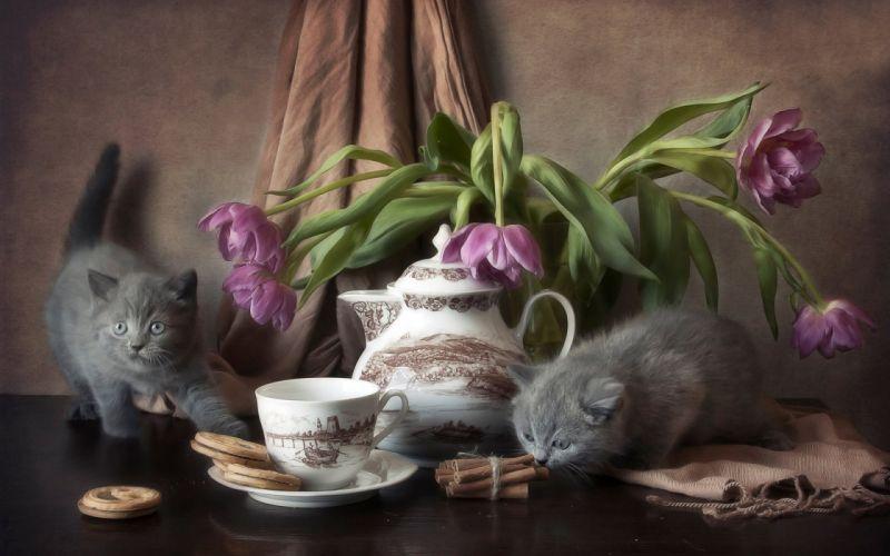 kitten table cookies flowers wallpaper