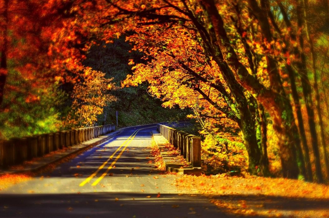 Leaves Fall Colorful Autumn Road Bridge Wallpaper