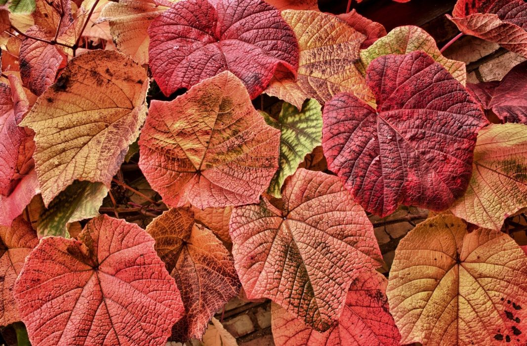 leaves red vines foliage wallpaper