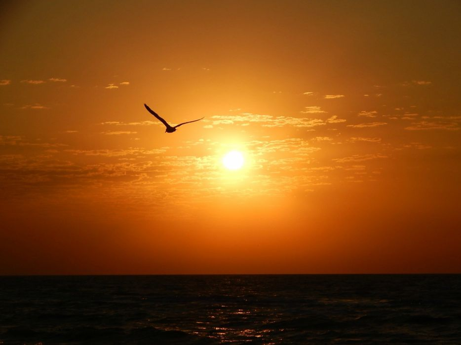 morning sun sea seagull wallpaper
