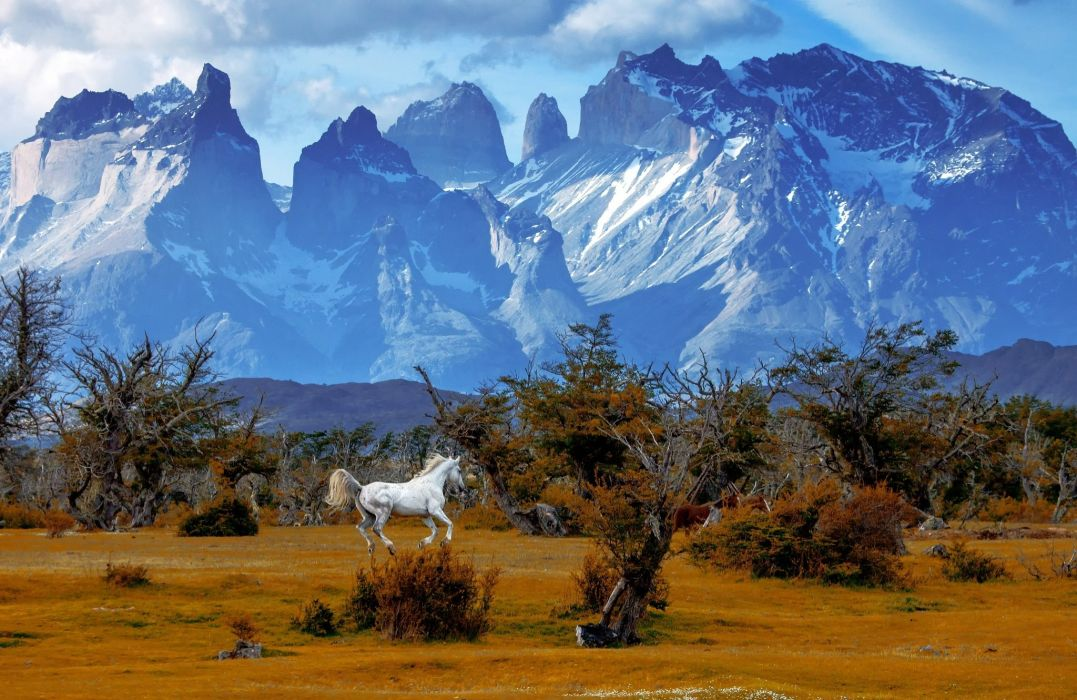 mountains trees horse national park Torres del Paine National Park Chile Patagonia autumn wallpaper