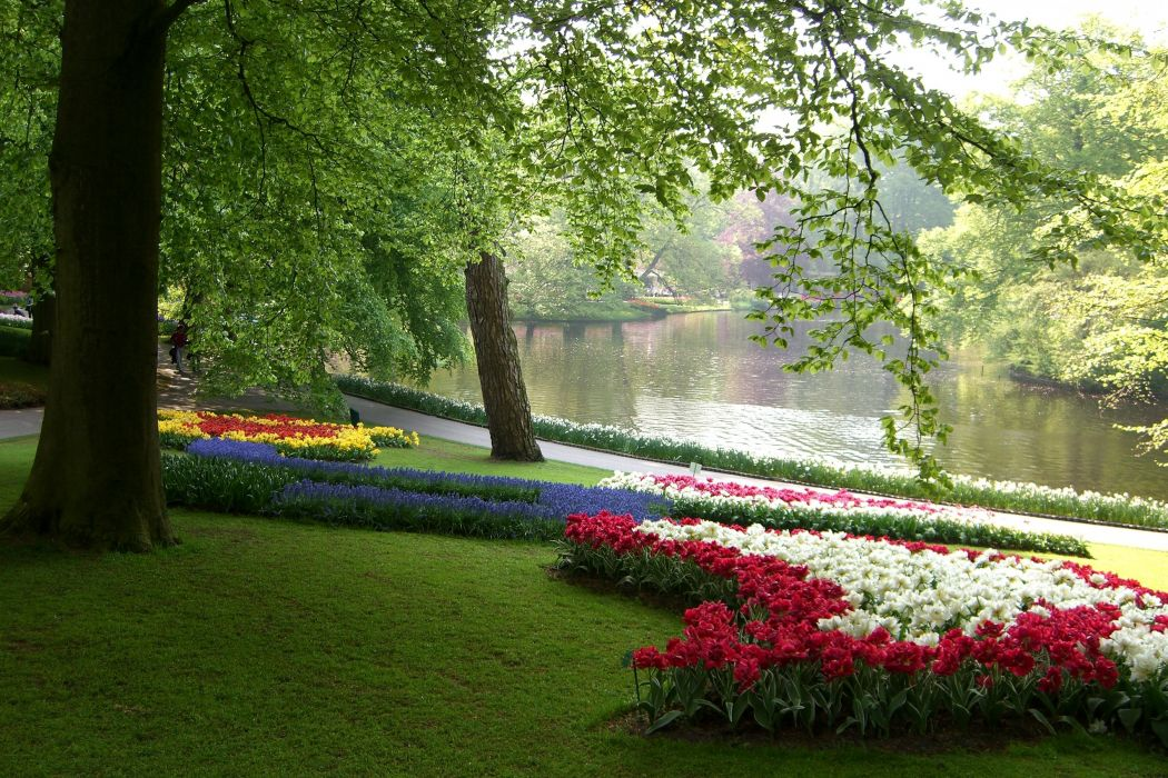Netherlands Parks Tulips Daffodils Pond Keukenhof Grass Nature wallpaper