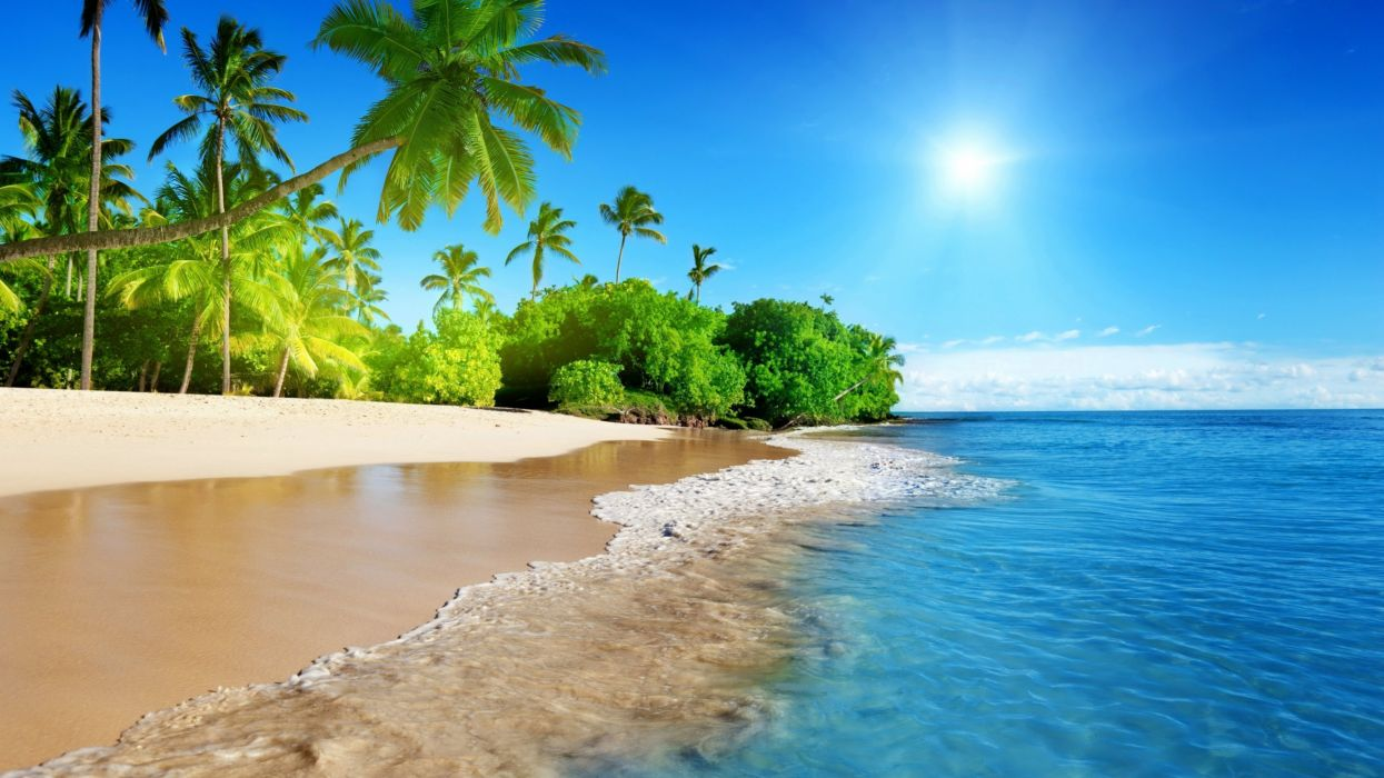 ocean palm trees tropical wave sun wallpaper