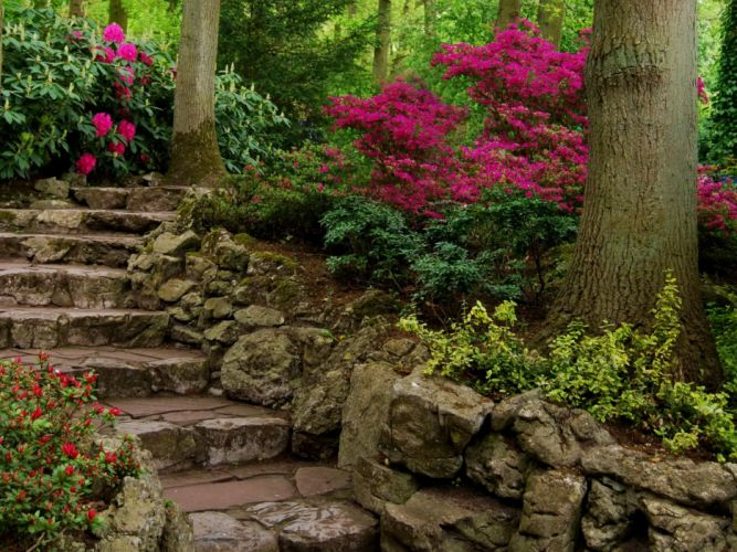 Parks Stairs Shrubs Trunk tree Nature wallpaper
